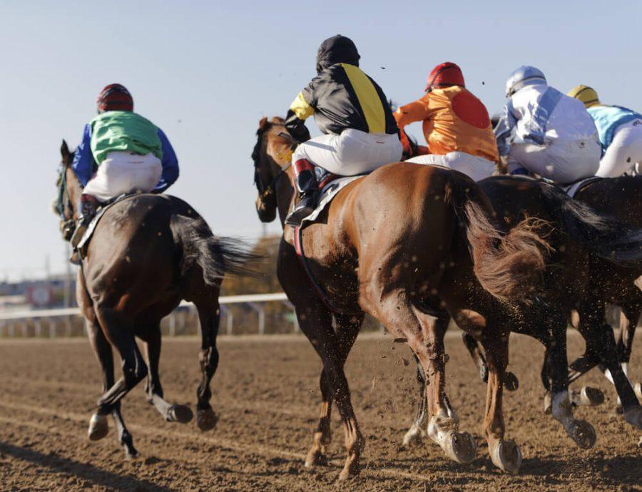 Closeup of racing horses starting a race