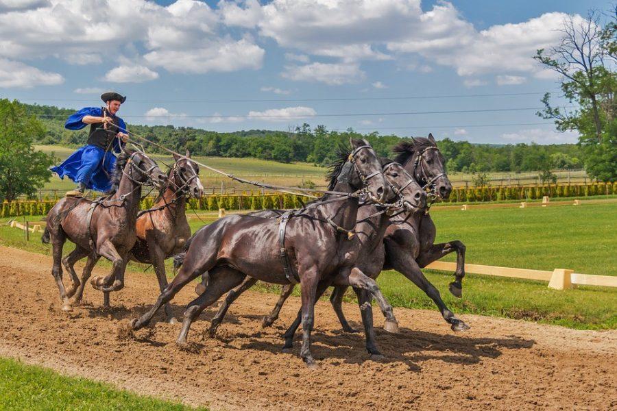Horse ride at the farm