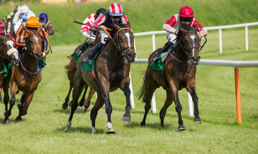 Race horses sprinting around