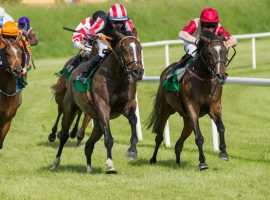 Everything There Is To Know About Horse Racing and Horse Trading