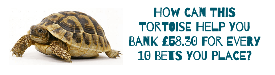 a Tortoise and Betting