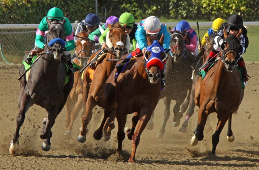 claiming race at Santa Anita Park