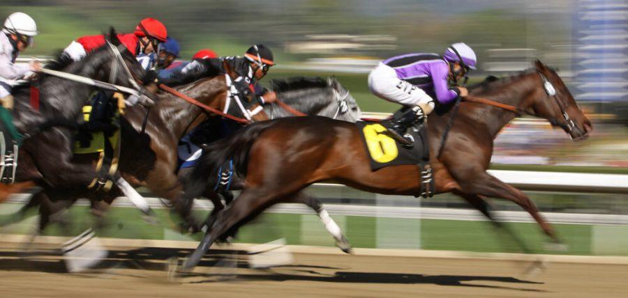 close up horse race