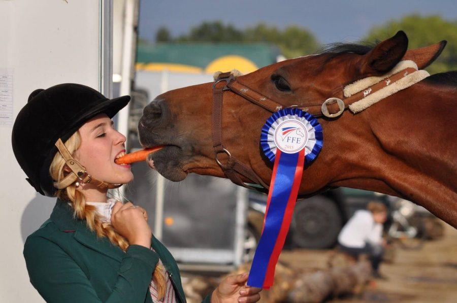 girl and horse feeding carrot