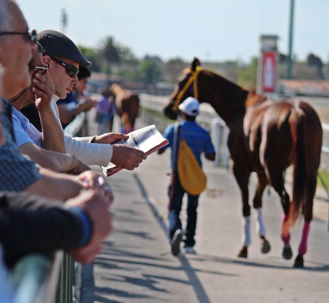 horse racing bettors