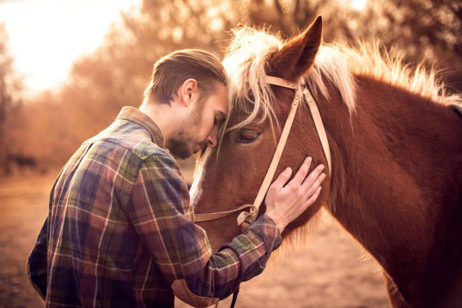 man hug horse