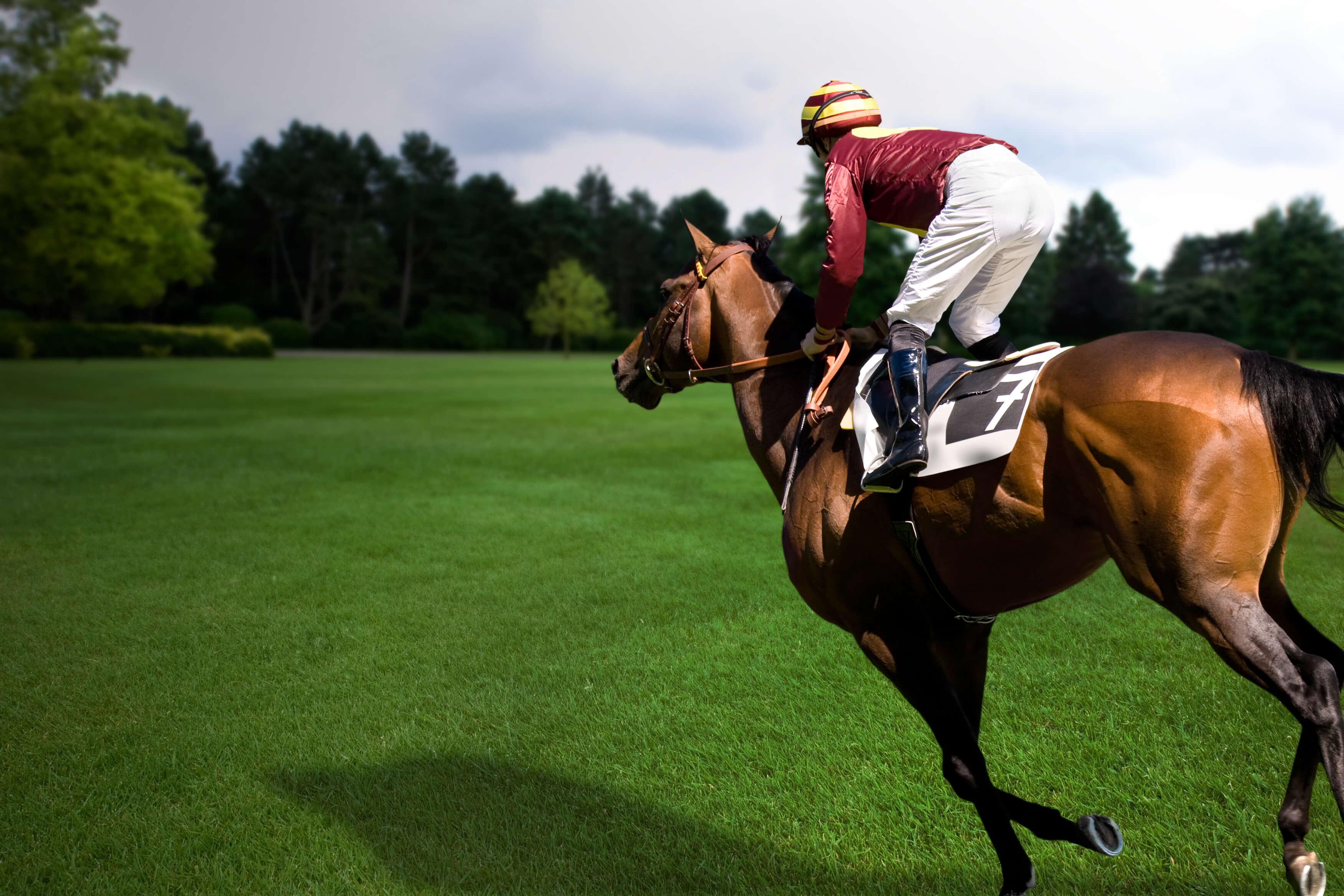 solo horse and jockey